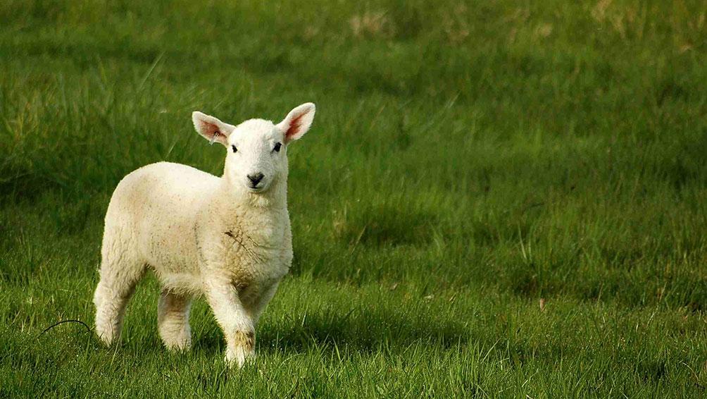 羊毛(ウール)の掛け布団の日常お手入れ