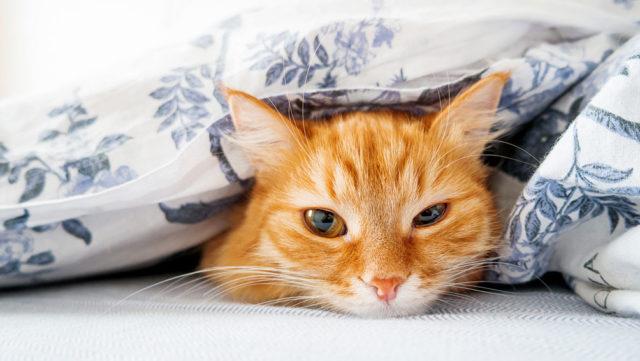 掛け布団にクリーニングは必要?ダニ・汚れ対策ができるお手入れのコツ
