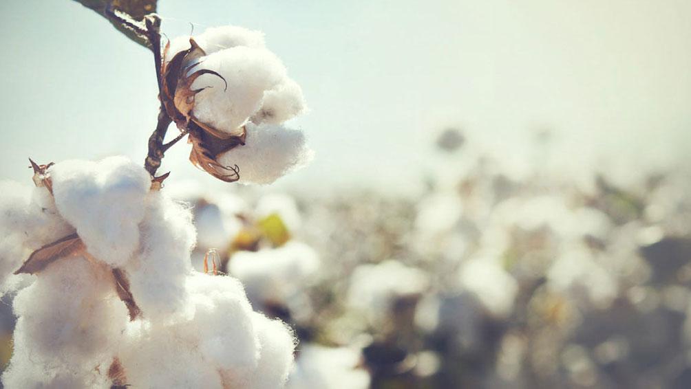 木綿(コットン)の掛け布団の日常お手入れ