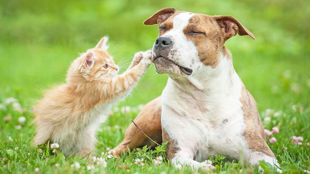 ペット可賃貸物件を探す時は条件と飼いたいペットについて吟味!