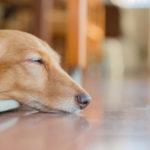 新居で動物を飼いたい!ペット可賃貸物件の探し方と気を付けたいポイント