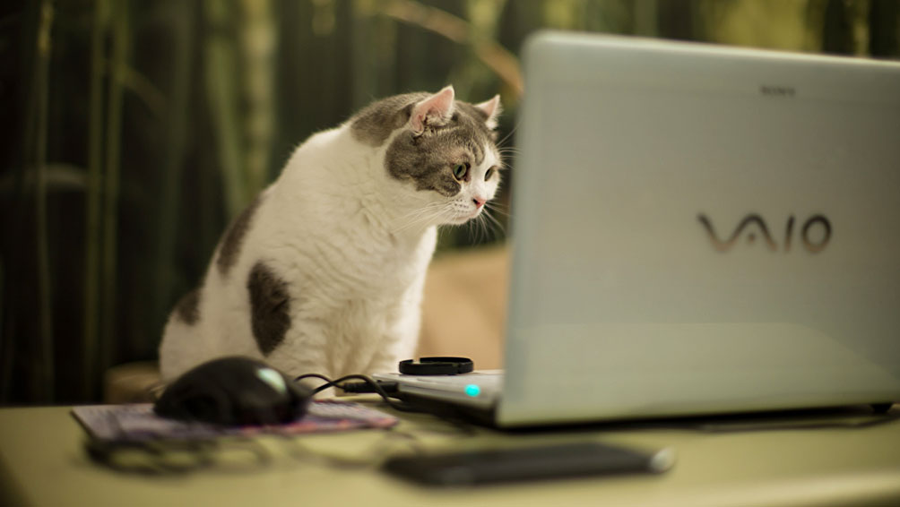 ペット可の賃貸物件を探すにあたって知っておきたいこと