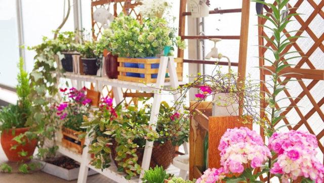 新居に花を♪初心者でもできるベランダガーデニングの始め方