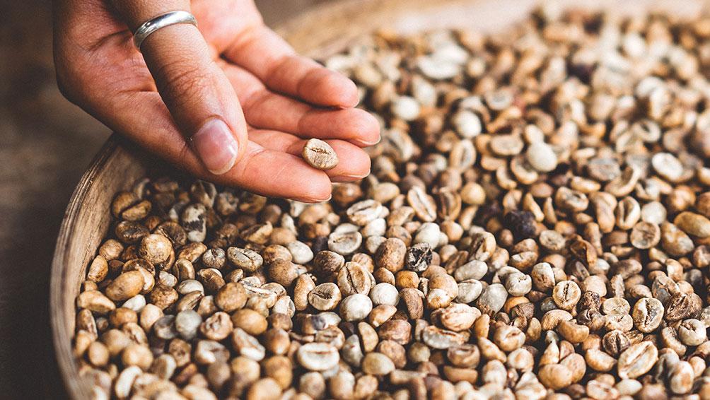 仕入れたコーヒー豆は必ずハンドピックで選定!