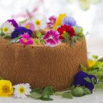 料理・お菓子を華やかに♪今注目のエディブルフラワーの種類と使い方