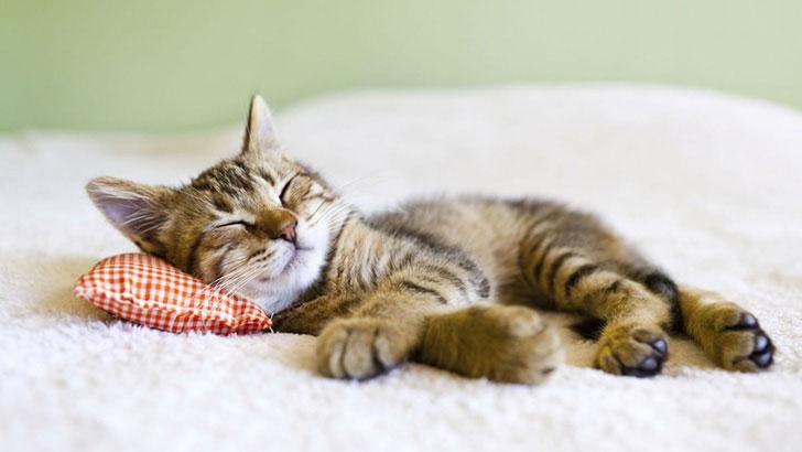 ペットに適切な治療をするためにもペット保険への加入を!
