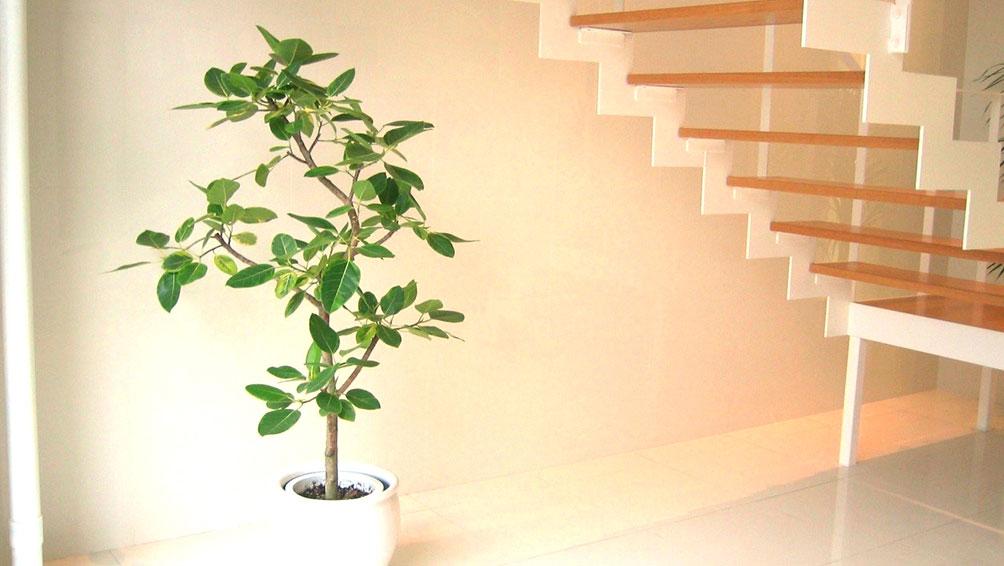 裏技その4:葉の大きい観葉植物を置く